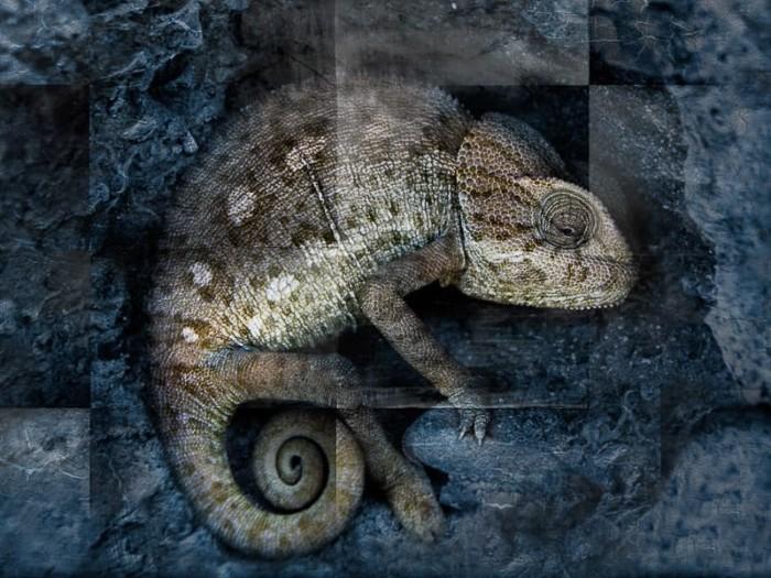 Photoshop Workshop Kreative Bildbearbeitungen Texturen Maskierung