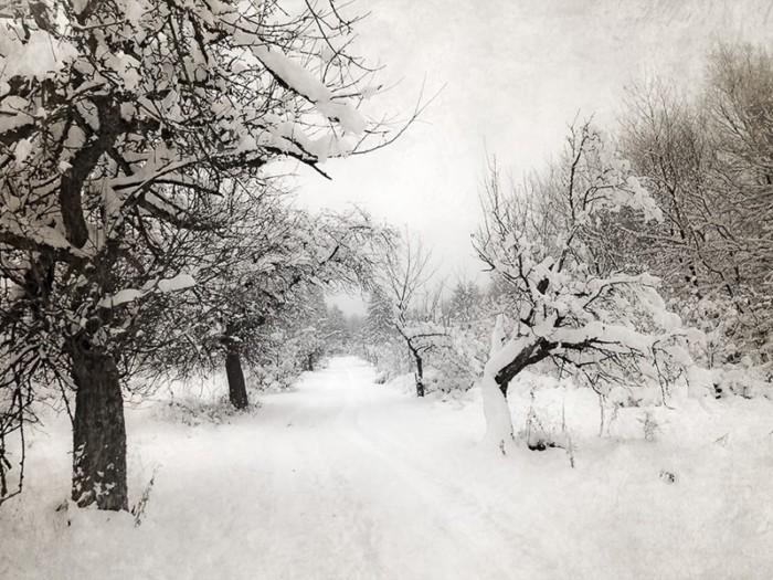 Praxisworkshop Baumfotografie – alte Bäume beeindruckend fotografieren 4-Stunden Einzelcoaching 1