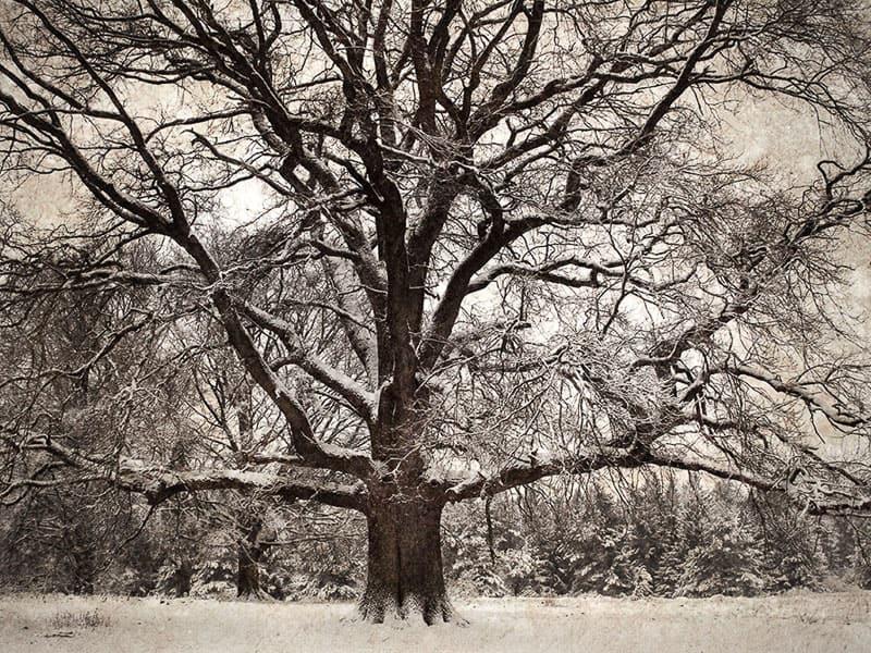 Baumfotografie - Landschaftsfotografie