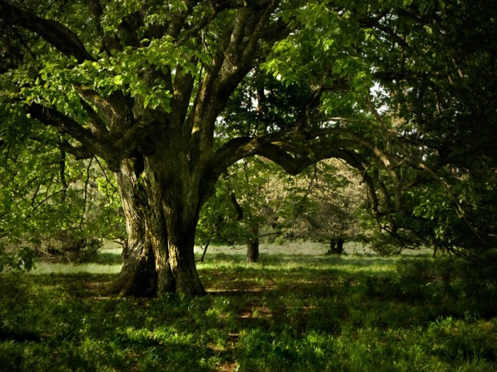 Praxisworkshop Baumfotografie – alte Bäume beeindruckend fotografieren 4-Stunden Einzelcoaching 2