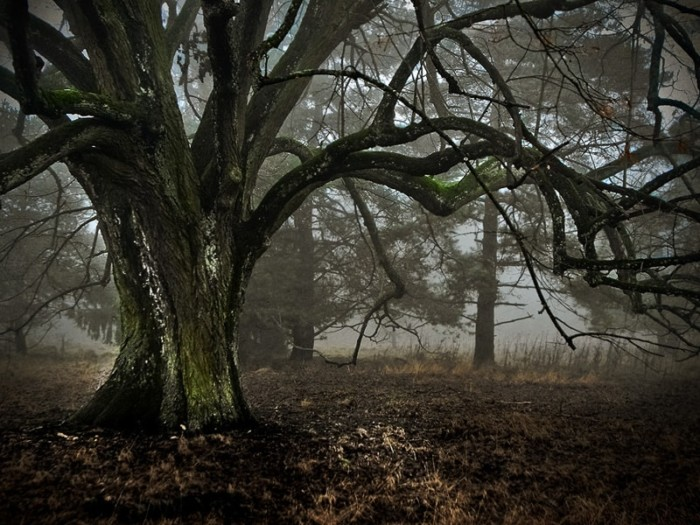 Praxisworkshop Baumfotografie – alte Bäume beeindruckend fotografieren 4-Stunden Einzelcoaching 3